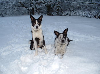 Blue and Lexxy enjoying the Snow.JPG